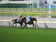 20141108 東京4R トーセンカナロア 13