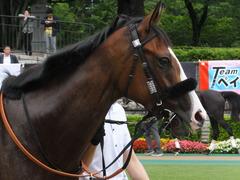 20170625 東京1R 3歳牝馬未勝利 プンメリン 13