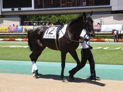 20150628 東京6R 3歳未勝利 コスモポッポ 04