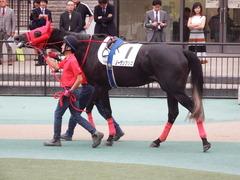 20181008 東京12R (500) ノーザンクリス 15