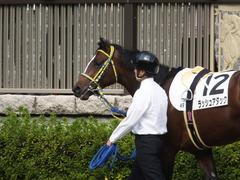 20141026 東京4R ラッシュアタック 05