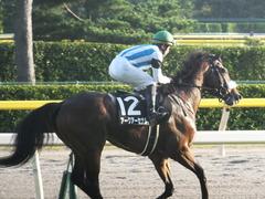 20161016 新潟12R 鳥屋野特別(500) アークアーセナル 19