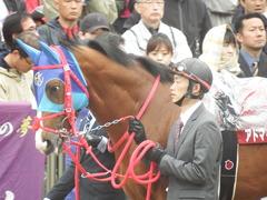 20190427 東京11R 青葉賞(G2) アドマイヤスコール 10