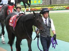 20141012 東京8R 東京HJ メジロサンノウ 05