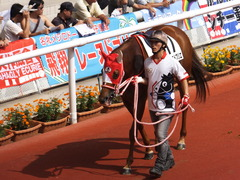 20161002 阪神7R (500) レーヌドブリエ 09