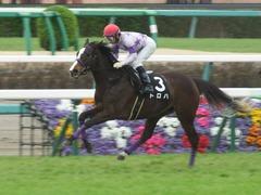 20190323 中山9R ミモザ賞 3歳牝馬(500) トロハ 15