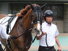 20170618 東京7R 33歳上500万下 ホウオウマリリン 02