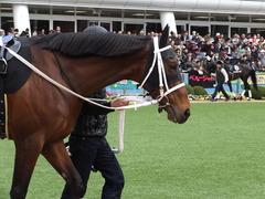 20150321 中山10R 韓国馬事会杯 ショウナンアポロン  04
