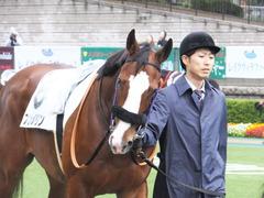 20161119 東京2R 2歳未勝利 プンメリン 03