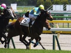 20170506 東京5R 3歳牝馬500万下 ビルズトレジャー 19
