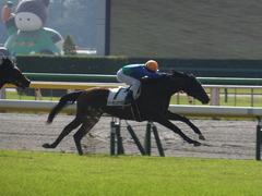 20141026 東京1R トーセンカナロア 11