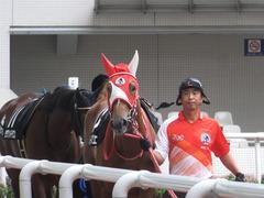 20170923 阪神10R 夕月特別(牝1000) レーヌドブリエ 04