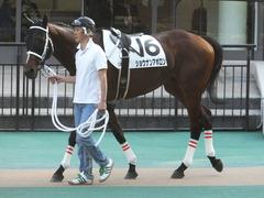 20141018 東京12R ショウナンアポロン 02