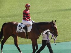 20161120 東京1R 2歳未勝利 メガポリゴン 14