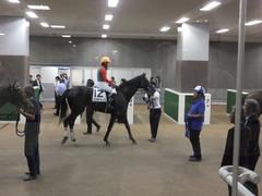 20150628 東京6R 3歳未勝利 コスモポッポ 14