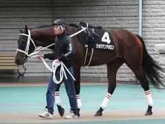 20151031 東京10R 赤富士S ショウナンアポロン 06