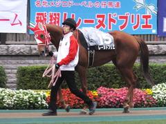 20151123 東京10R 鷹巣山特別 レーヌドブリエ 07