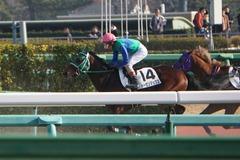 20191214 中山6R 2歳メイクデビュー トーセンマックス 22
