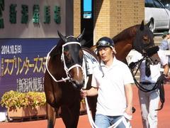20140928 新潟8R ショウナンアポロン 02