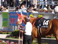 20161016 新潟10R 粟島特別(牝500) レーヌドブリエ 06