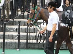 20161008 東京9R 山中湖特別(牝1000) ツクバアスナロ 10