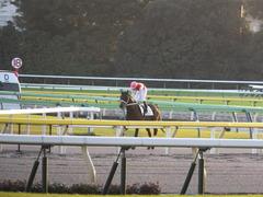 20141018 東京12R ショウナンアポロン 16