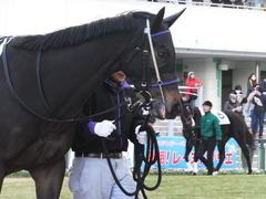 20170114 京都8R 4歳上牝馬500万下 サラマンカ 05