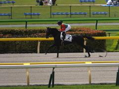 20150523 東京3R 3歳未勝利 コスモポッポ 13