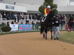 20170114 京都8R 4歳上牝馬500万下 サラマンカ 11