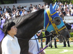 20140511 東京11R NHKマイルカップ(G1)アドマイヤビジン09