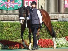 20181125 東京8R オリエンタル賞(1000) ロジスカーレット 03
