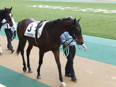 20141130 東京3R 2歳未勝利 トーセンカナロア 04