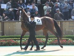 20131117 東京 ビップレボルシオン 02