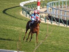 20170114 京都10R 北大路特別 4歳上牝馬1000万下 レーヌドブリエ 21