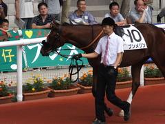 20161002 阪神5R 2歳メイクデビュー プンメリン 13
