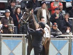 20160227 中山5R 3歳メイクデビュー ツボミ 12