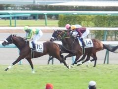 20151227 中山4R 2歳メイクデビュー アークアーセナル 15
