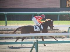 20181228 中山2R 2歳牝馬未勝利 パーフェクトワン 14