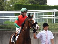 20161002 阪神5R 2歳メイクデビュー プンメリン 22