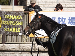 20150221 東京2R 3歳未勝利 コスモポッポ 05