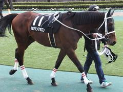 20150222 東京11R 金蹄S ショウナンアポロン 05