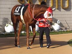 20170114 京都10R 北大路特別 4歳上牝馬1000万下 レーヌドブリエ 08