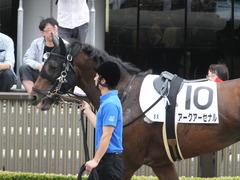 20170527 東京8R 4歳上500 アークアーセナル 06
