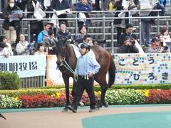 20141130 東京3R 2歳未勝利 トーセンカナロア 03