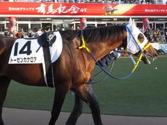 20161224 中山12R (500) トーセンカナロア 05