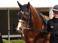 20150321 中山10R 韓国馬事会杯 ランドマーキュリー 02