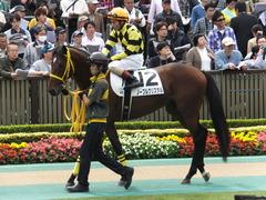 20141102 東京4R ノーブルクリスタル 12