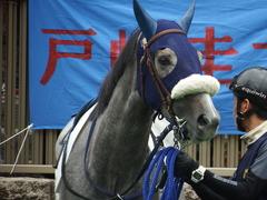 20180526 東京3R 3歳未勝利 ウェディングベール 10