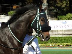 20171111 東京2R 2歳未勝利 ハッピーテーラー 05