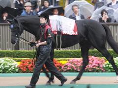 20151108 東京11R AR共和国杯 サトノノブレス 07